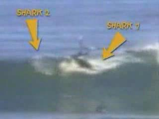 Surfing Shark Attack