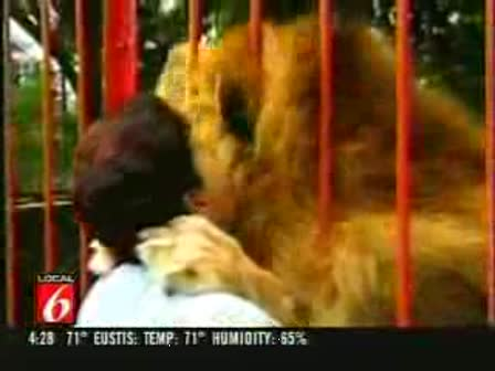 Who said lions eat people at the zoo
