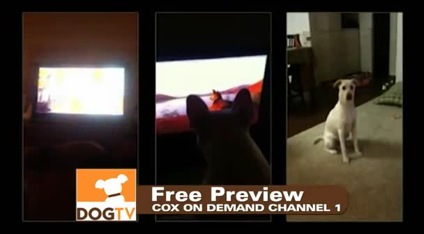 TELEVISION FOR DOGS!!